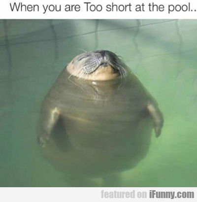 When You Are Too Short At The Pool...