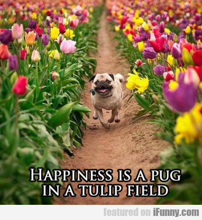 happiness is a pug in a tulip field