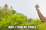 Why I Trim My Pubes...