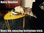 Hairy Houdini Does His Amazing Levitation Trick