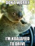 Don't Worry, I Am Koalafied To Drive...