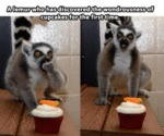 A Lemur Who Has Discovered The Wondrousness