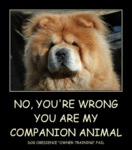 No You Re Wrong You Are My Companion Animal
