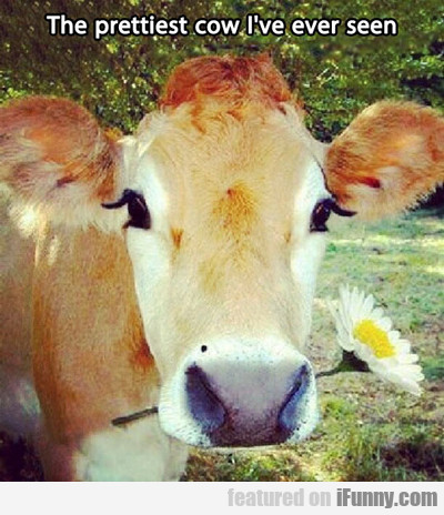 The Prettiest Cow I Have Ever Seen...
