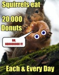 Squirrels Eat 20000 Donuts
