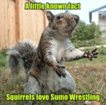 A Little Known Fact Squirrels
