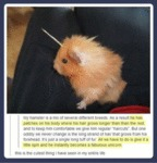 My Hamster Is A Mix...
