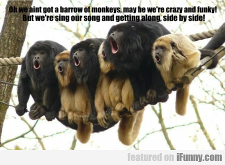 Oh We Aint Got A Barrow Of Monkeys May Be We Re Cr