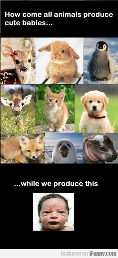 how come all animals produce cute babies.
