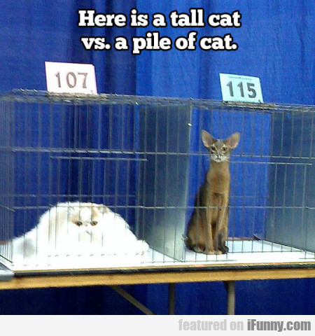 Here Is A Tall Cat Vs A Pile Of Cat