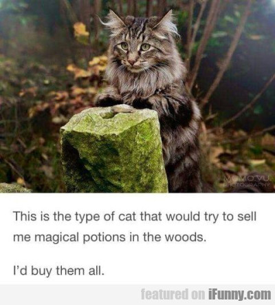 This Is The Type Of Cat Thet Would Try To Sell