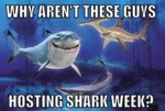 Why Aren't These Guys Hosting Shark Week?