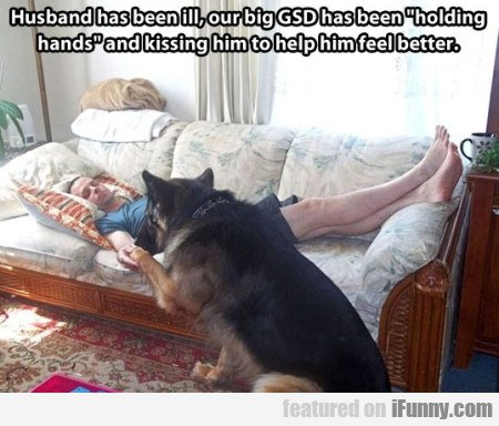 Husband has been ill, our big GSD..
