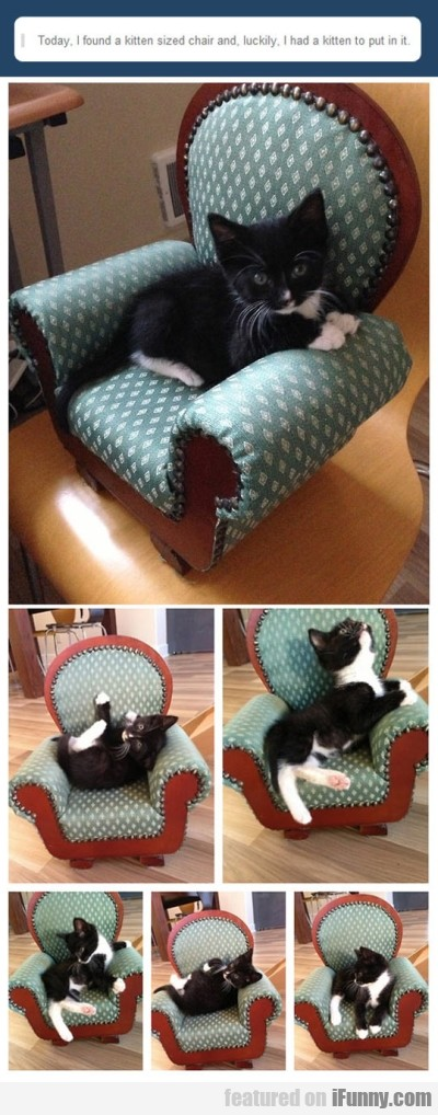 Today, I Found A Kitten Sized Chair And...