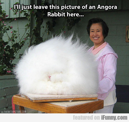 I'll Just Leave This Picture Of An Angora Rabbit