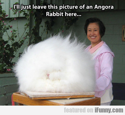 I'll Just Leave This Picture Of An Angorra...