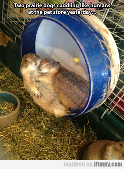 two prairie dogs...