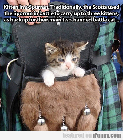 Kitten In A Sporran