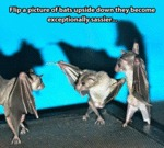 Flip A Picture Of Bats Upside Down...