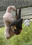 Ralphie, Like Other Rescue Bats...
