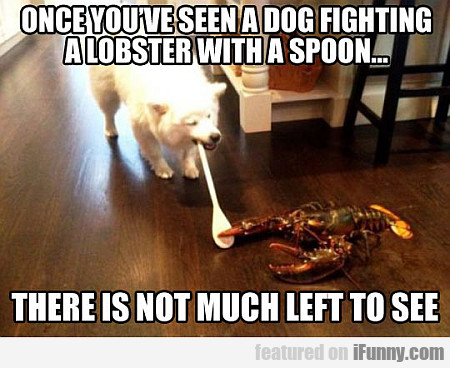 Once You've Seen A Dog Fighting A Lobster...