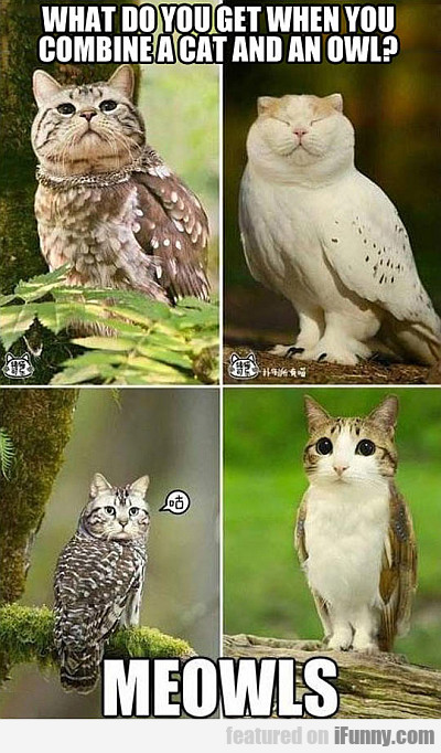 What Do You Get When You Combine A Cat And An Owl?