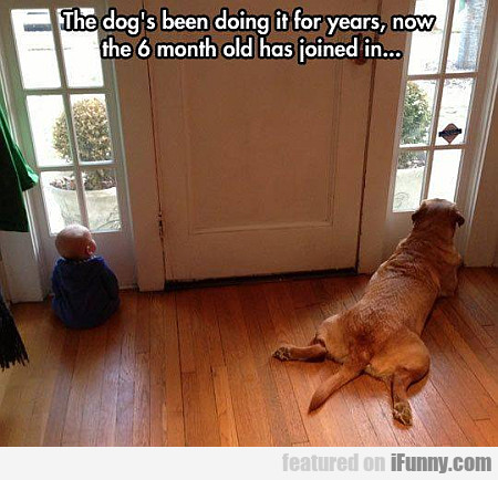 the dog's been doing it for years
