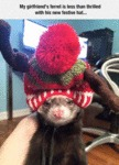 My Girlfriend's Ferret...