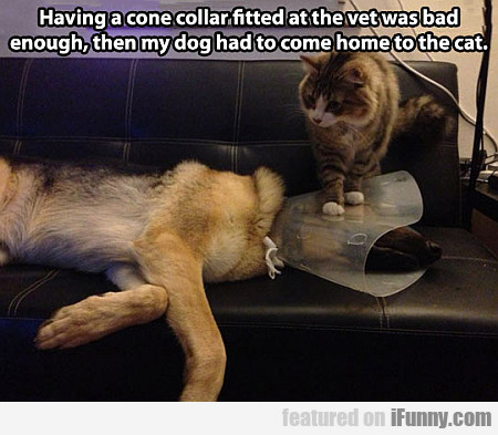 Having A Cone Collar Fitted At The Vet...