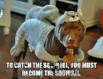 To Catch The Squirrel, You Must Become One