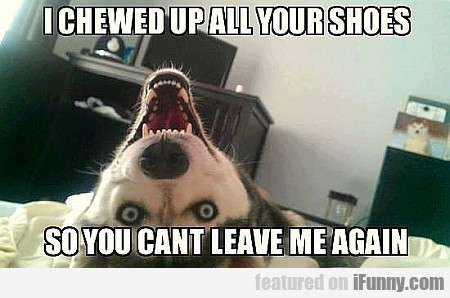 I Chewed Up All Your Shoes...
