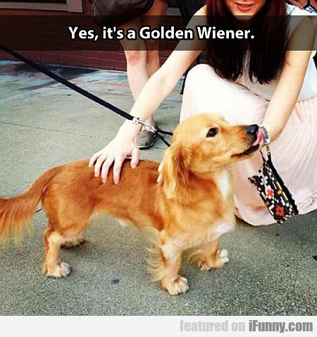 Yes, It's A Golden Wiener