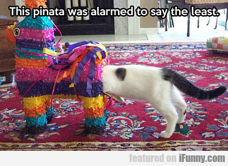 this pinata was alarmed to say the least...