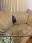 My Friend's Dog Is Terrible At Hide And Seek