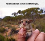 Not All Australian Animals Want To Kill You...