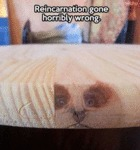 Reincarnation Gone Horrible Wrong...