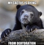 My Cactus Is Dying From Dehydration...