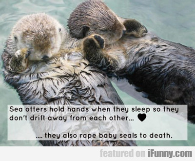 Sea Otters Hold Hands When They Sleep...