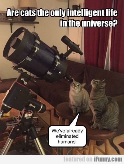 Are Cats The Only Intelligent Life Forms?