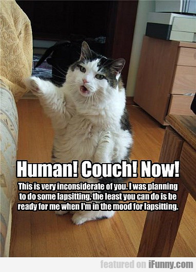 Human! Couch! Now!