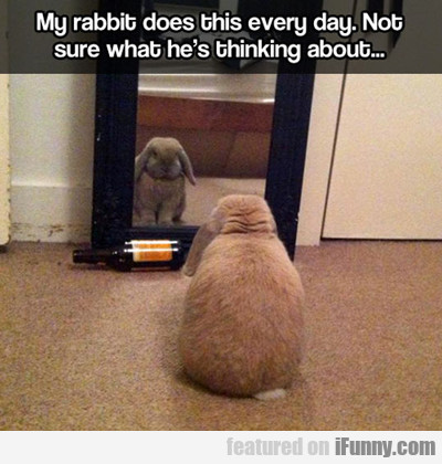 My Rabbit Does This Everyday...