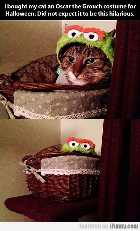 I Bought My Cat An Oscar The Grouch Costume...