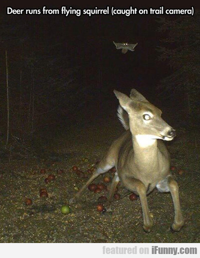 Deer Runs From Flying Squirrel...