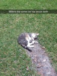 Mittens The Comet Cat Has Struck Earth