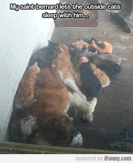 My Saint Bernard Lets The Outside Cats...