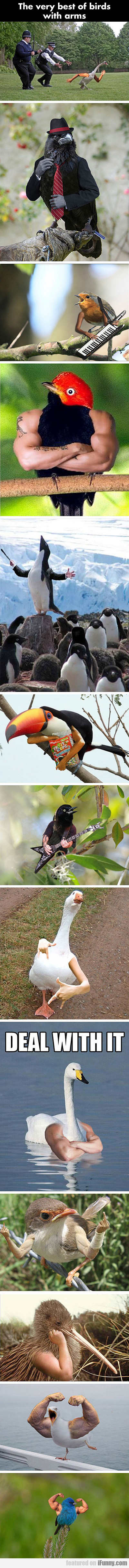 The Very Best Of Birds With Arms