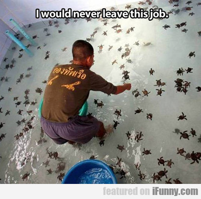 I Would Never Leave This Job...