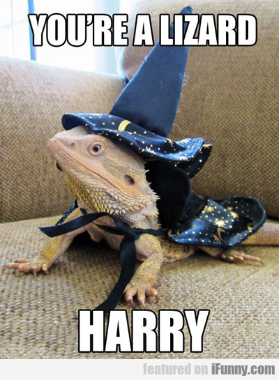 You're A Lizard Harry...