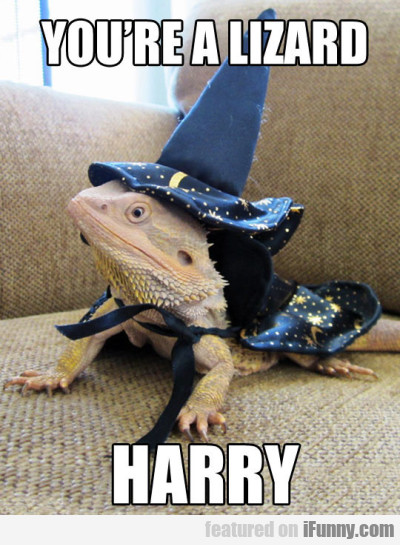 Youre A Lizzard Harry