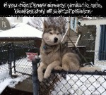 Huskies Defy All Laws Of Physics